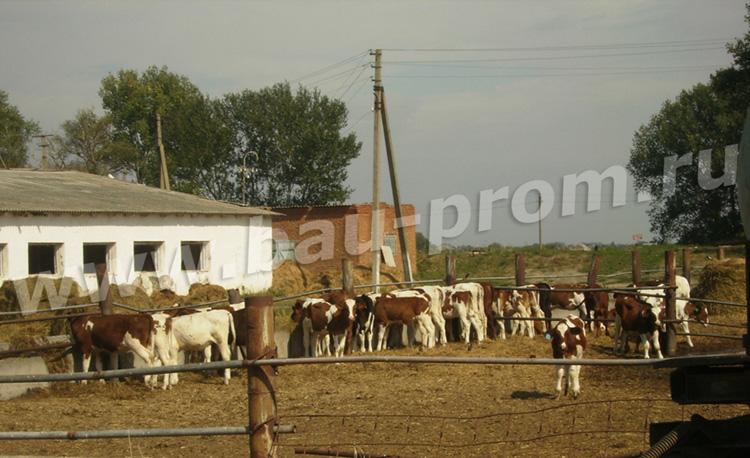 промышленные полы для сельского хозяйства